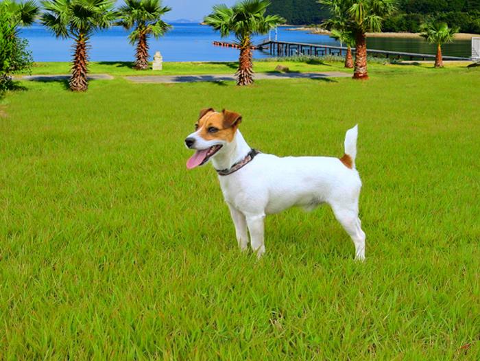 休日だって愛犬と過ごしたい!小豆島のペットと一緒に泊まれるホテル