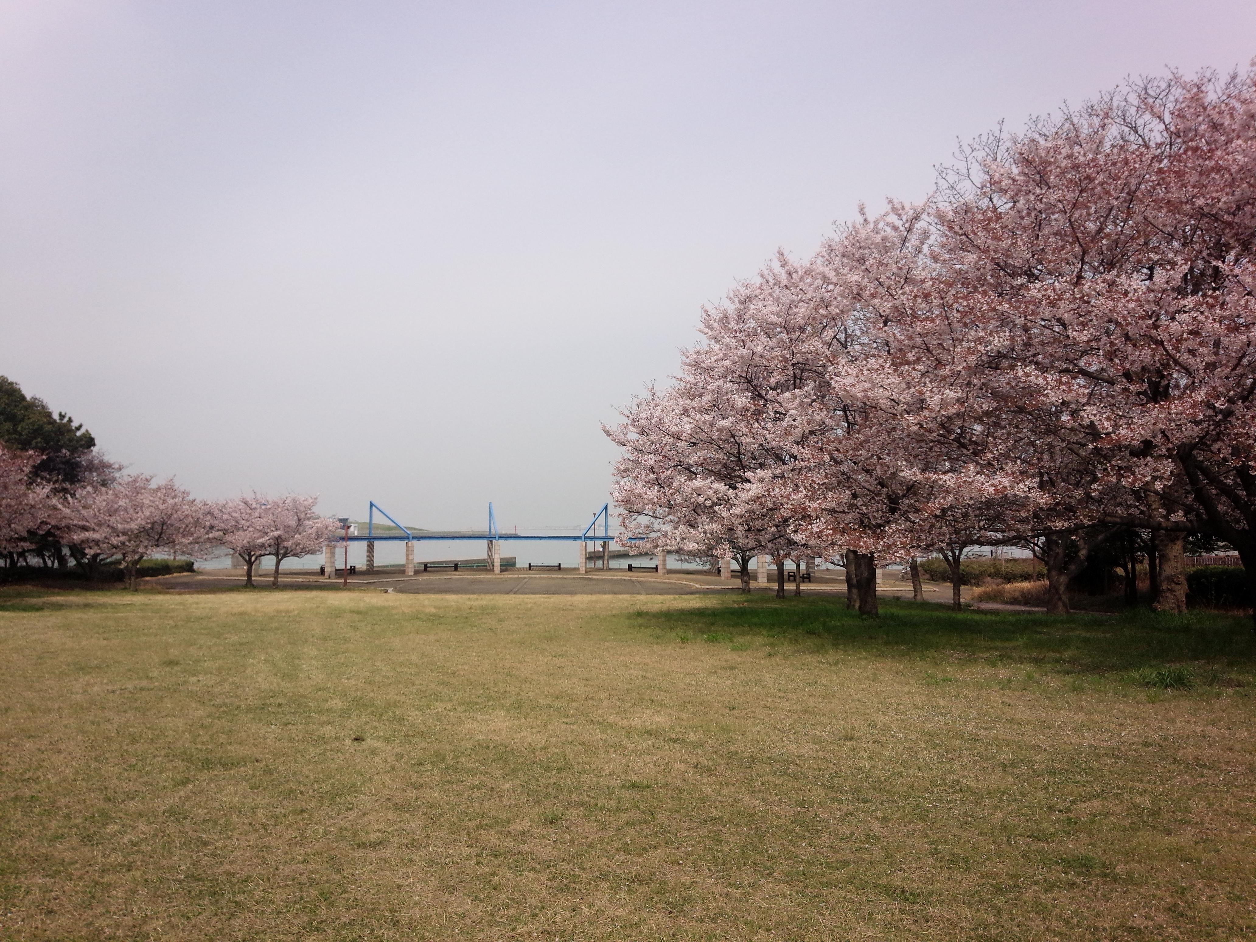 大阪でおすすめのお花見の穴場『大阪北港マリーナ』