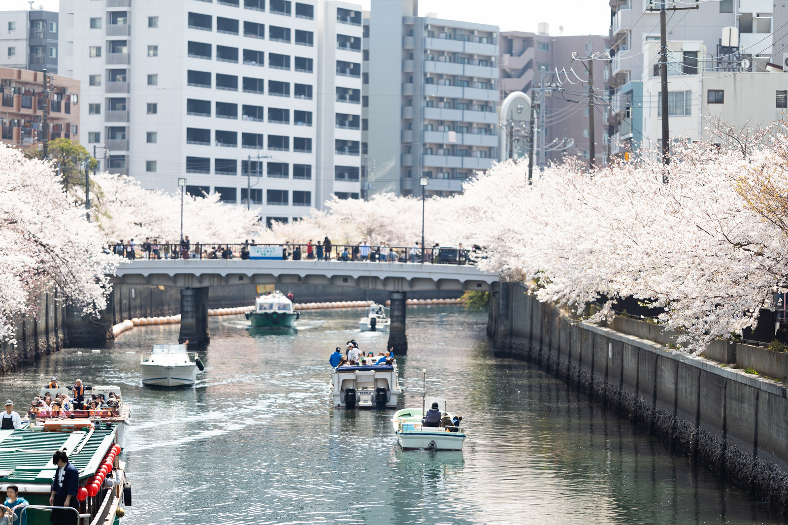 横浜の大岡川の桜を船で見に行こう!おすすめお花見クルージング